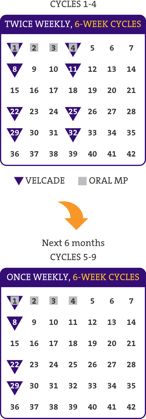 Treatment schedule for VELCADE (multiple myeloma): calendars showing cycles 1-4 and next 6 months, cycles 5-9